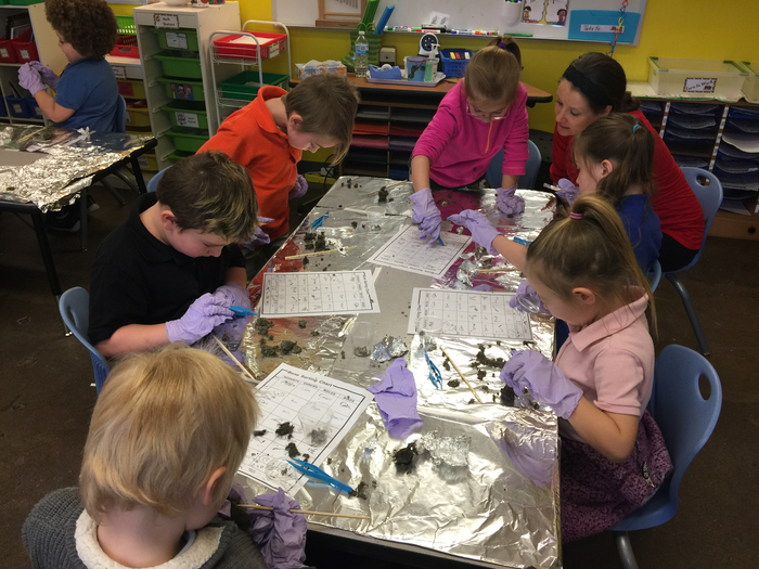 Students dissected pellets and matched their finds to bone sorting charts to figure out what the owl had eaten.